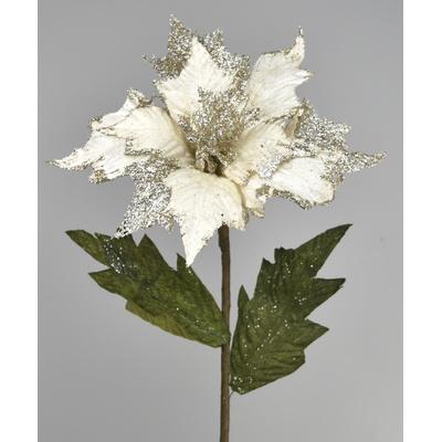 Poinsetia bílá